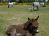 Donkeys in the New Forest