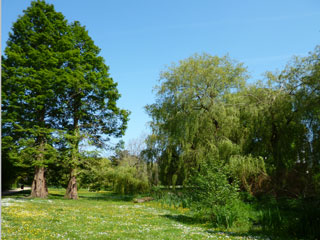 trees and gardens, coy pond