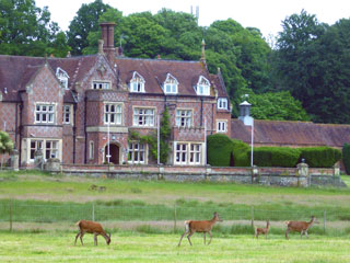 Deer at Burley Manor in the New Forest