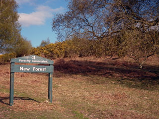 New Forest sign