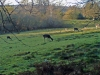 Deer in New Forest